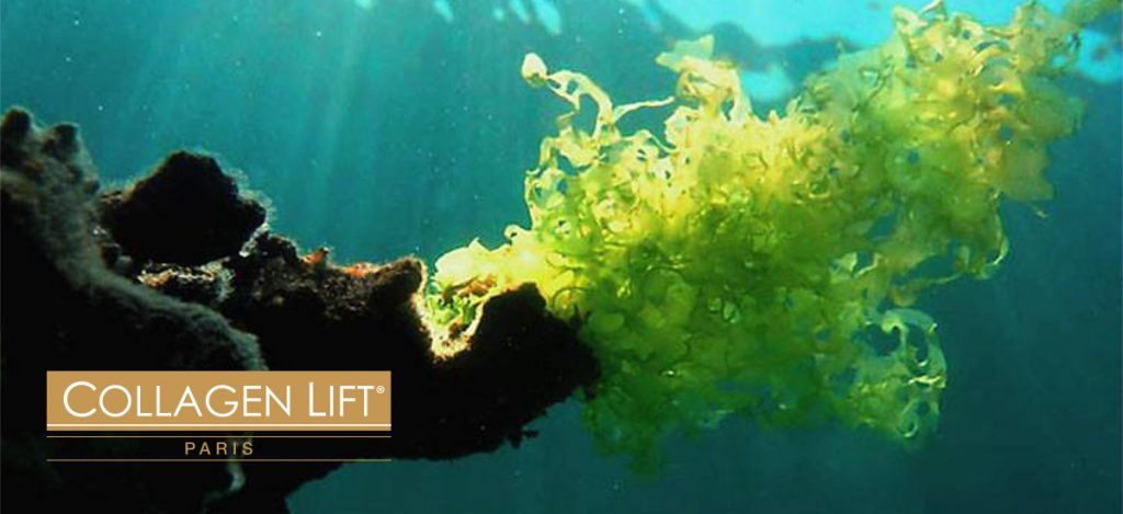 The Benefits of Seaweed Extract